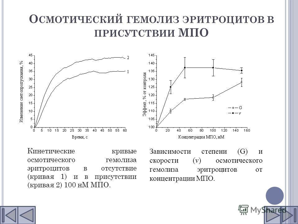 О СМОТИЧЕСКИЙ ГЕМОЛИЗ ЭРИТРОЦИТОВ В ПРИСУТСТВИИ МПО Кинетические кривые осмотического гемолиза эритроцитов в отсутствие (кривая 1) и в присутствии (кривая 2) 100 нМ МПО. Зависимости степени (G) и скорости (v) осмотического гемолиза эритроцитов от кон