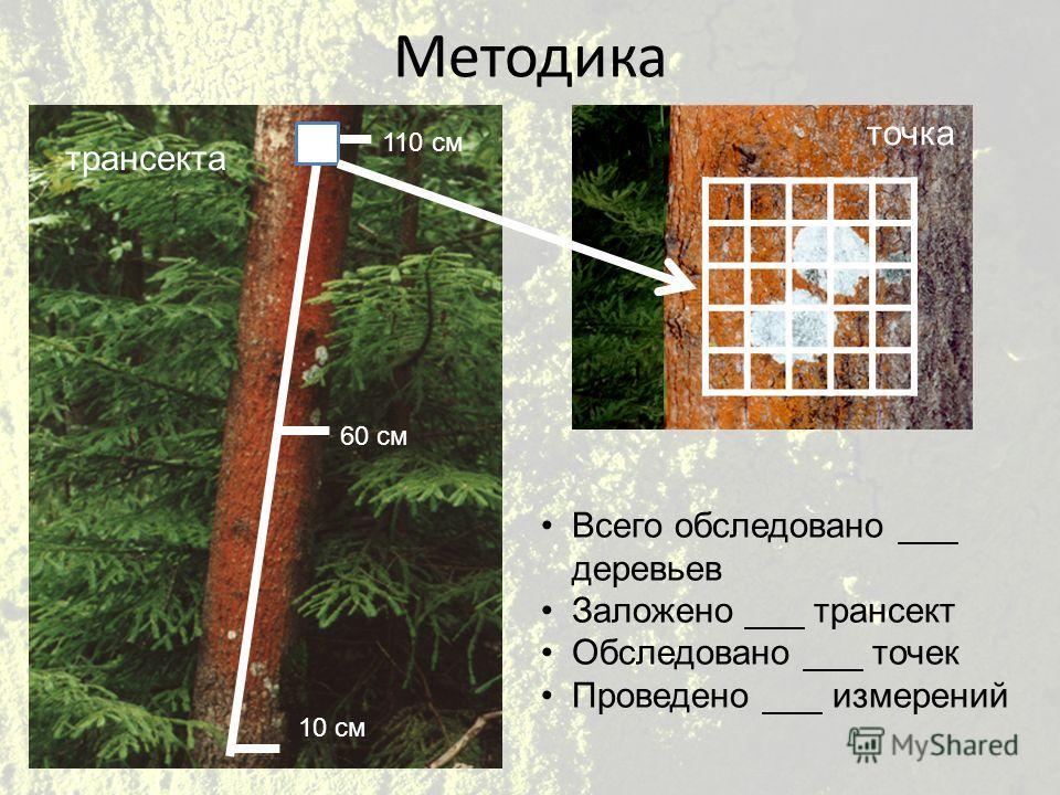 Методика 110 см 60 см 10 см Всего обследовано ___ деревьев Заложено ___ трансект Обследовано ___ точек Проведено ___ измерений трансекта точка