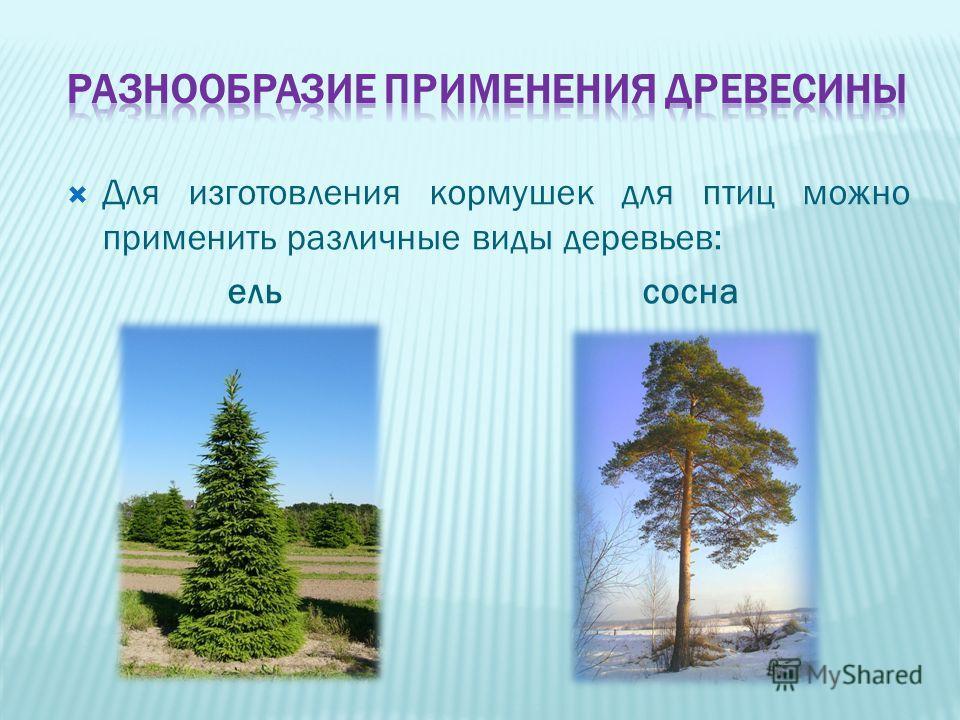 Для изготовления кормушек для птиц можно применить различные виды деревьев: ельсосна
