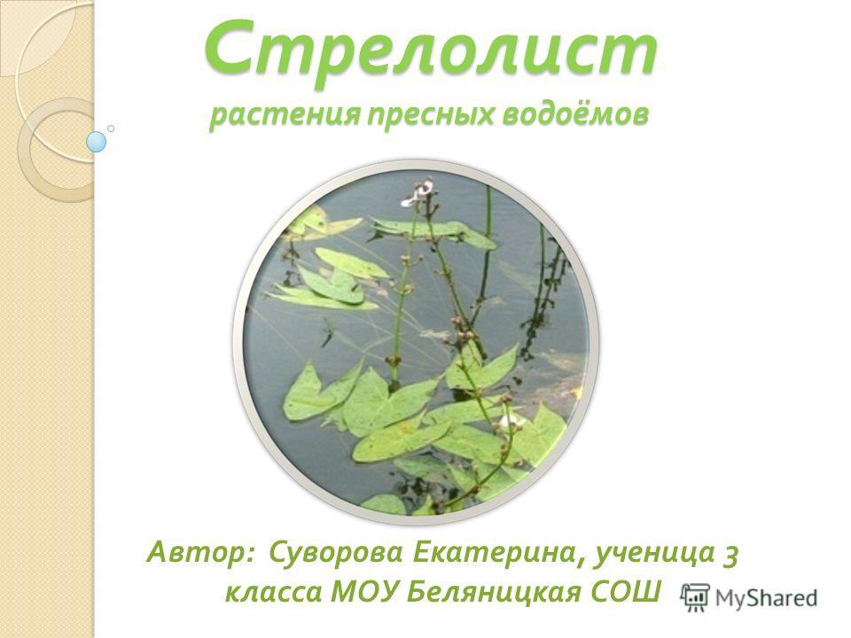 C трелолист растения пресных водоёмов Автор : Суворова Екатерина, ученица 3 класса МОУ Беляницкая СОШ