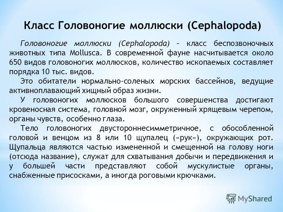 Класс Головоногие моллюски (Сephalopoda) Головоногие моллюски (Cephalopoda) – класс беспозвоночных животных типа Mollusca. В современной фауне насчитывается около 650 видов головоногих моллюсков, количество ископаемых составляет порядка 10 тыс. видов