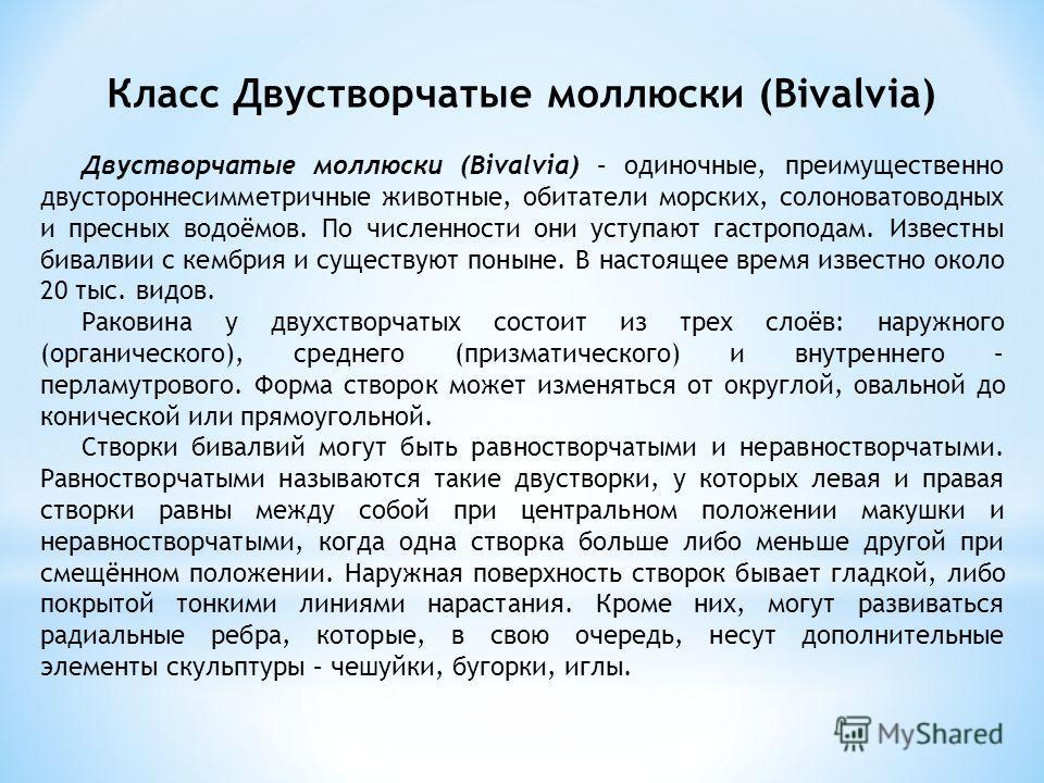Класс Двустворчатые моллюски (Bivalvia) Двустворчатые моллюски (Bivalvia) – одиночные, преимущественно двустороннесимметричные животные, обитатели морских, солоноватоводных и пресных водоёмов. По численности они уступают гастроподам. Известны бивалви