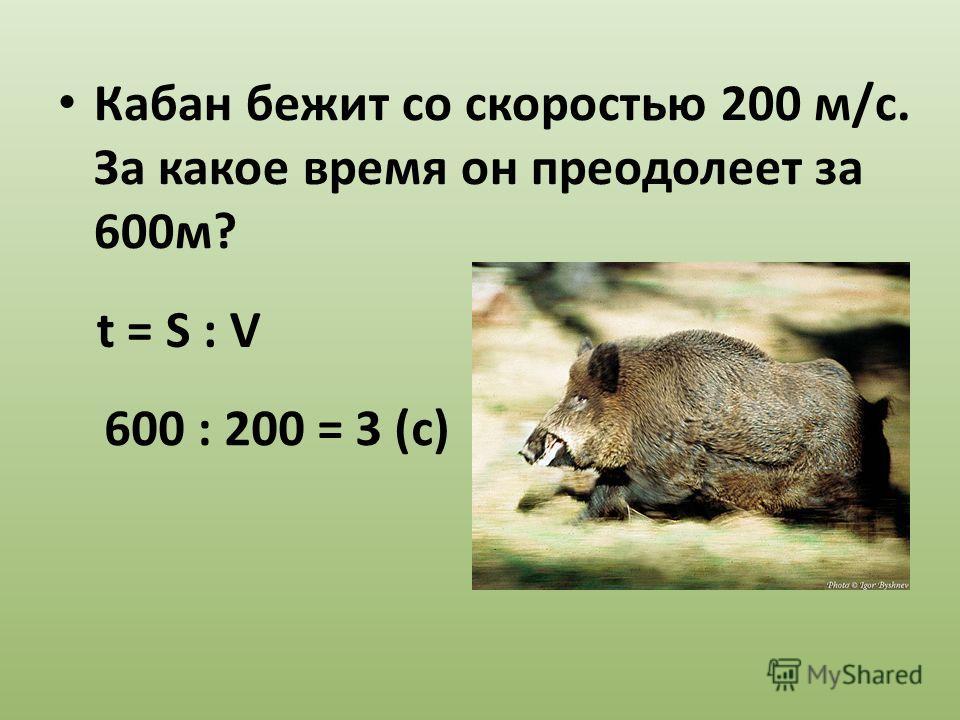 Кабан бежит со скоростью 200 м/с. За какое время он преодолеет за 600м? 600 : 200 = 3 (с) t = S : V