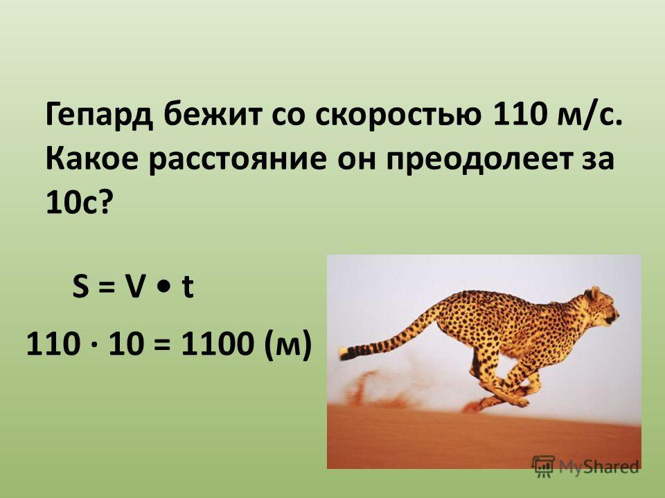 Гепард бежит со скоростью 110 м/с. Какое расстояние он преодолеет за 10с? 110 10 = 1100 (м) S = V t