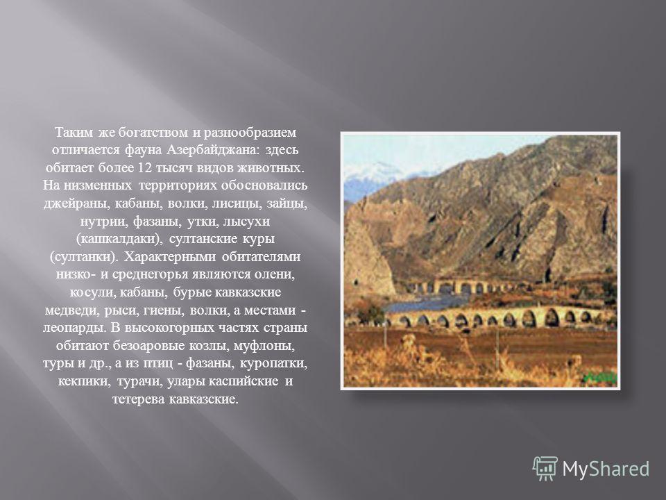 Таким же богатством и разнообразием отличается фауна Азербайджана : здесь обитает более 12 тысяч видов животных. На низменных территориях обосновались джейраны, кабаны, волки, лисицы, зайцы, нутрии, фазаны, утки, лысухи ( кашкалдаки ), султанские кур