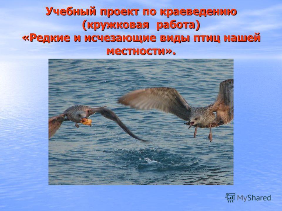 Учебный проект по краеведению (кружковая работа) «Редкие и исчезающие виды птиц нашей местности».
