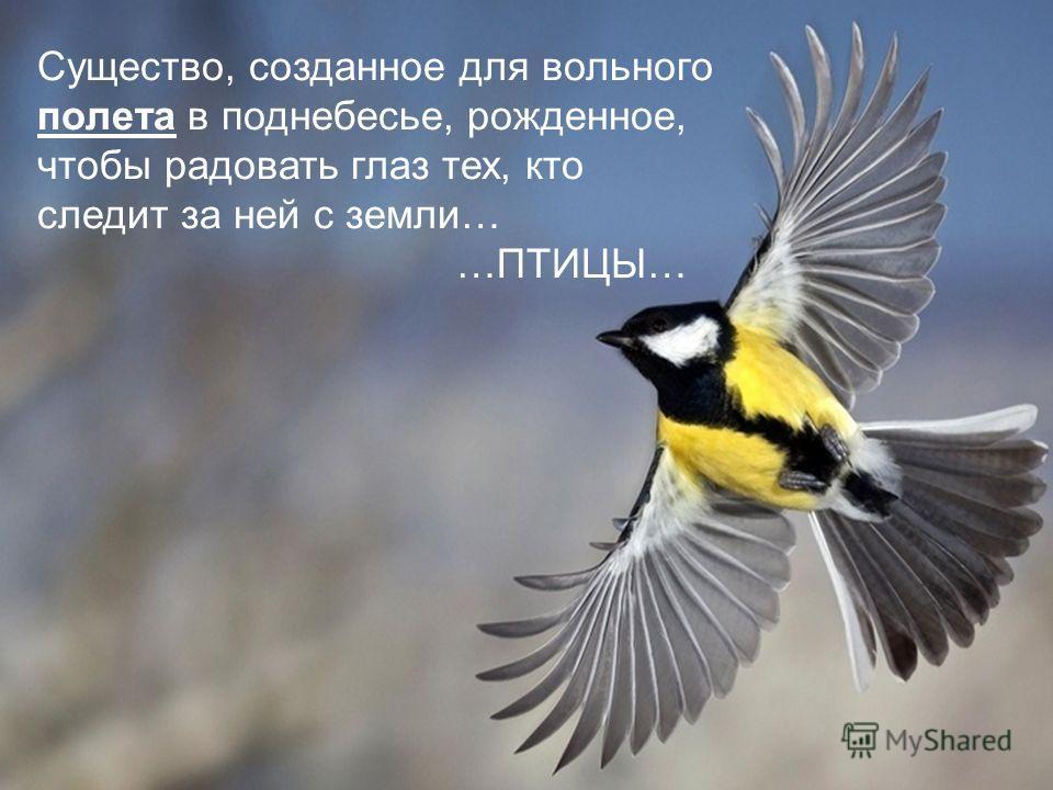 Существо, созданное для вольного полета в поднебесье, рожденное, чтобы радовать глаз тех, кто следит за ней с земли… …ПТИЦЫ…