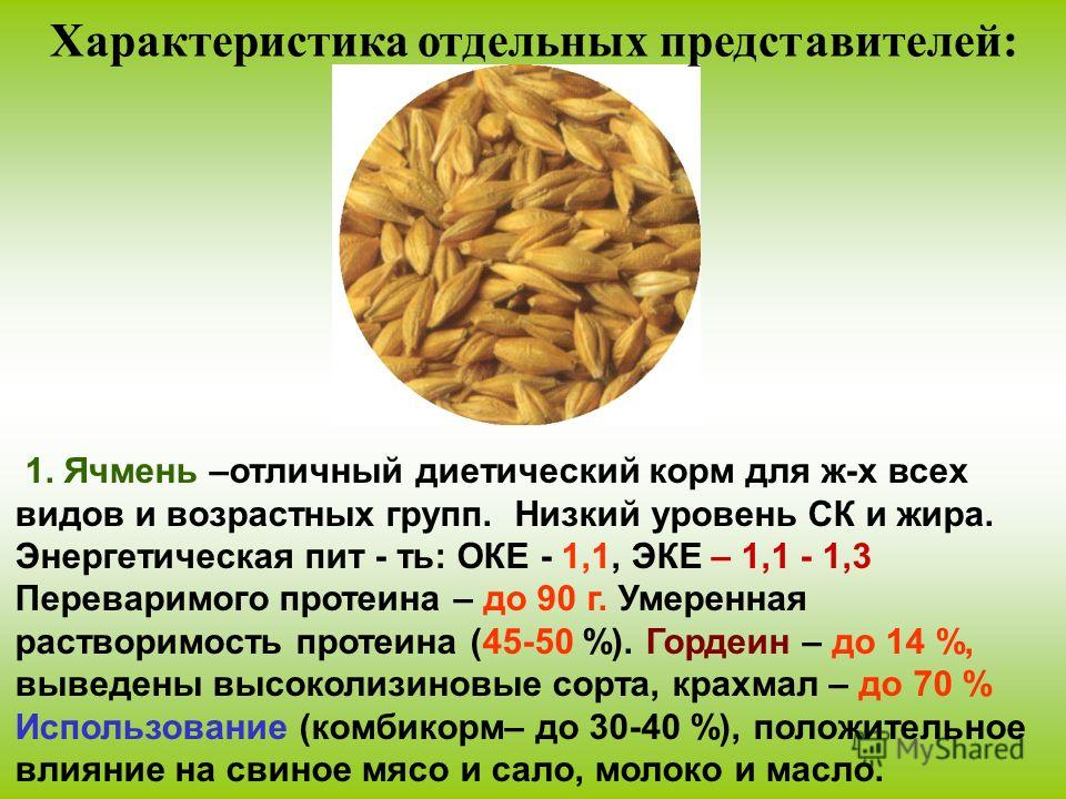 1. Ячмень –отличный диетический корм для ж-х всех видов и возрастных групп. Низкий уровень СК и жира. Энергетическая пит - ть: ОКЕ - 1,1, ЭКЕ – 1,1 - 1,3 Переваримого протеина – до 90 г. Умеренная растворимость протеина (45-50 %). Гордеин – до 14 %,