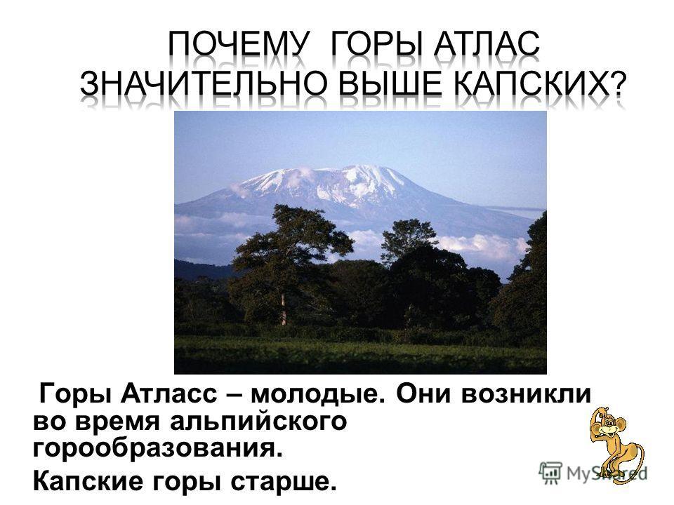 Горы Атласс – молодые. Они возникли во время альпийского горообразования. Горы Атласс – молодые. Они возникли во время альпийского горообразования. Капские горы старше.