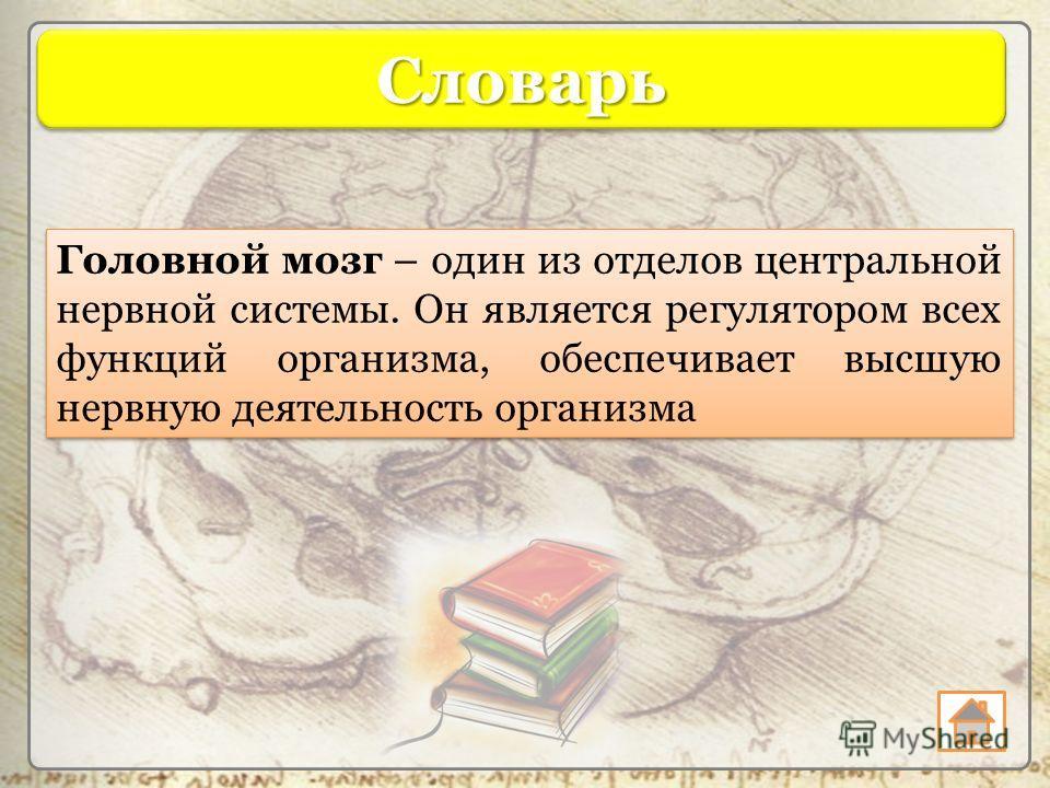 СловарьСловарь Головной мозг – один из отделов центральной нервной системы. Он является регулятором всех функций организма, обеспечивает высшую нервную деятельность организма