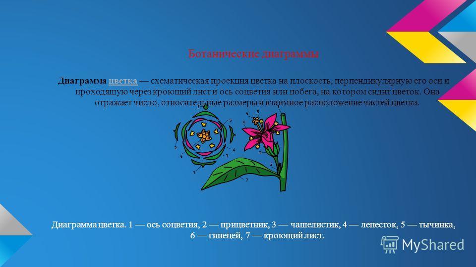 Ботанические диаграммы Диаграмма цветка схематическая проекция цветка на плоскость, перпендикулярную его оси и проходящую через кроющий лист и ось соцветия или побега, на котором сидит цветок. Она отражает число, относительные размеры и взаимное расп