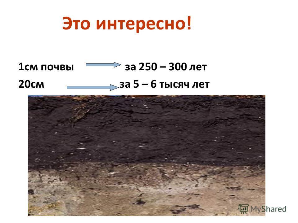 Это интересно ! 1 см почвы за 250 – 300 лет 20 см за 5 – 6 тысяч лет