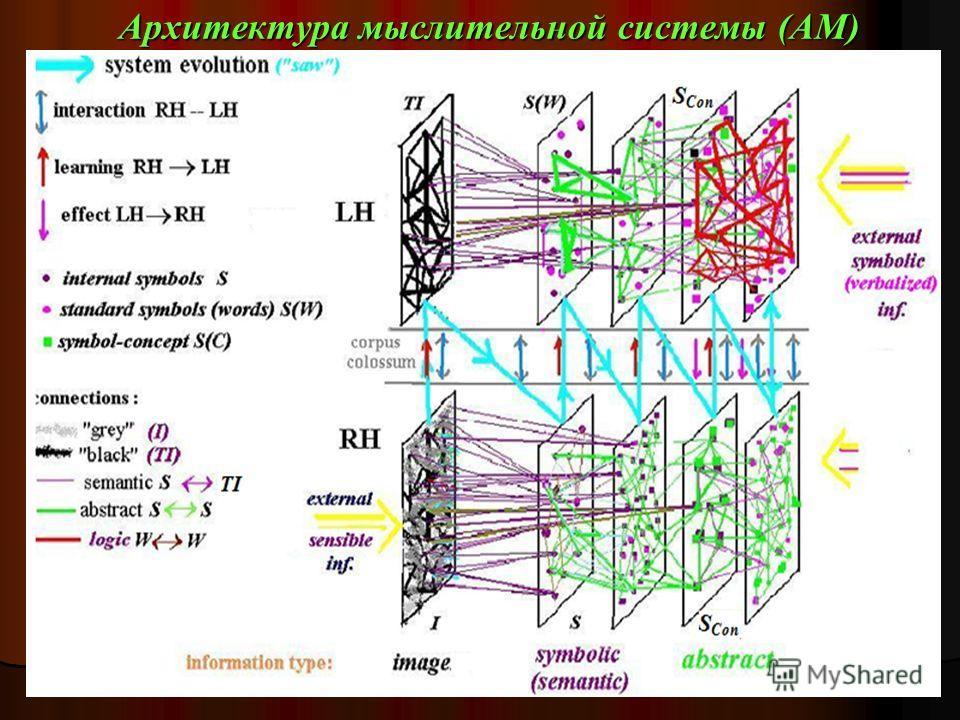 Архитектура мыслительной системы (АМ)