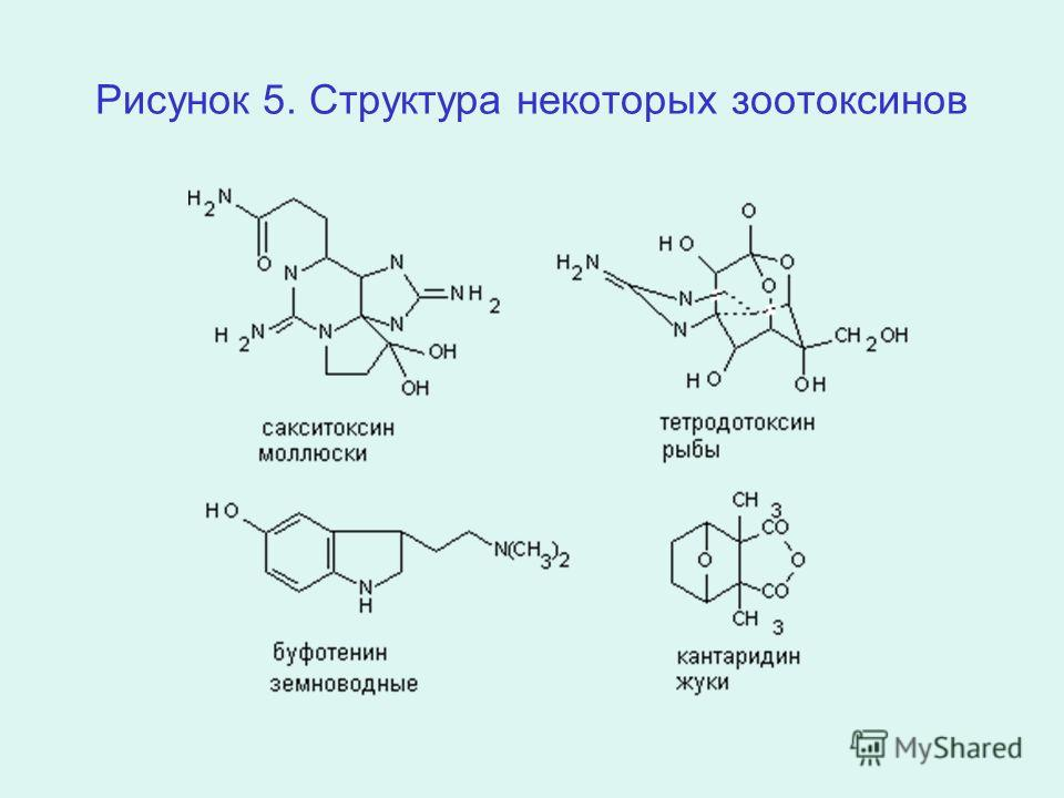 Рисунок 5. Структура некоторых зоотоксинов