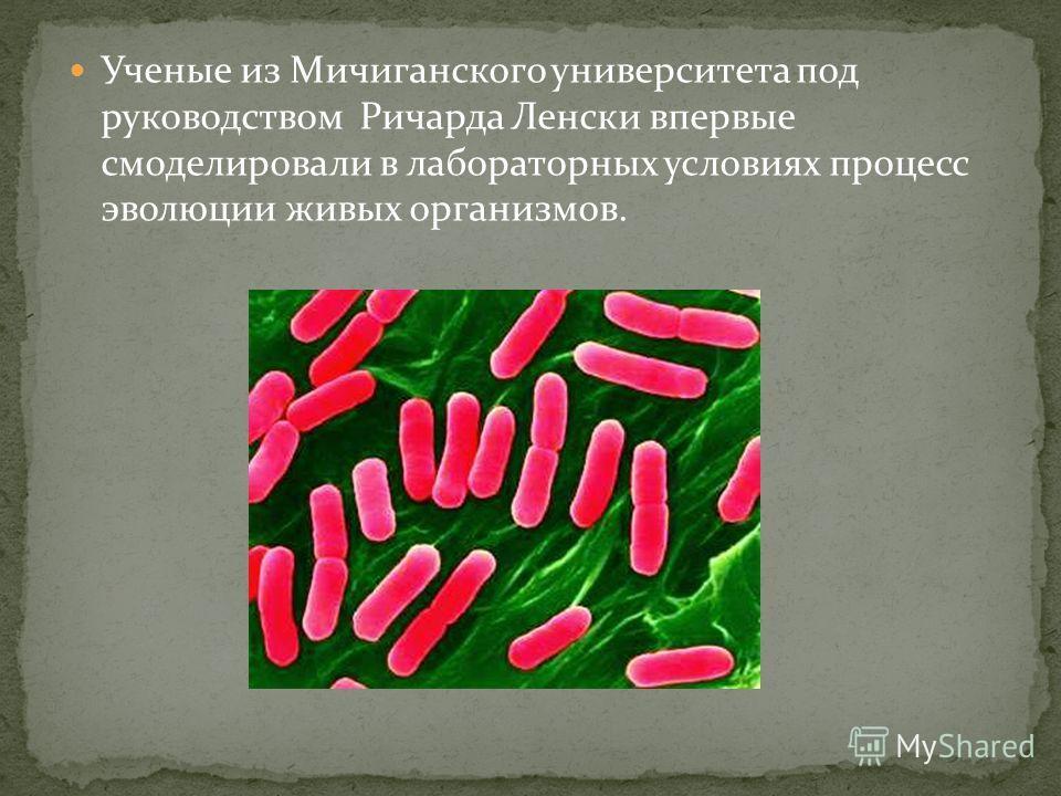 Ученые из Мичиганского университета под руководством Ричарда Ленски впервые смоделировали в лабораторных условиях процесс эволюции живых организмов.