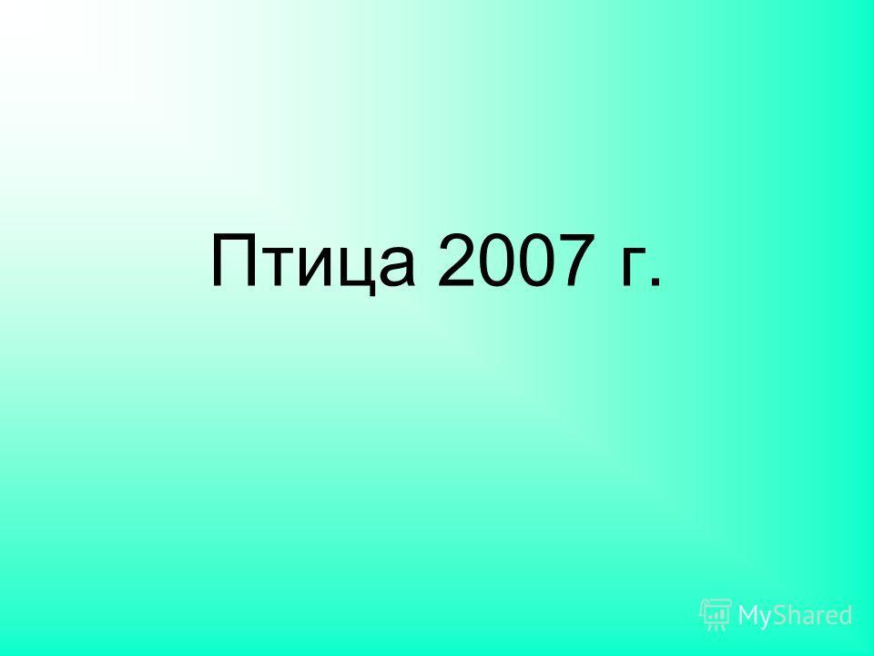 Птица 2007 г.