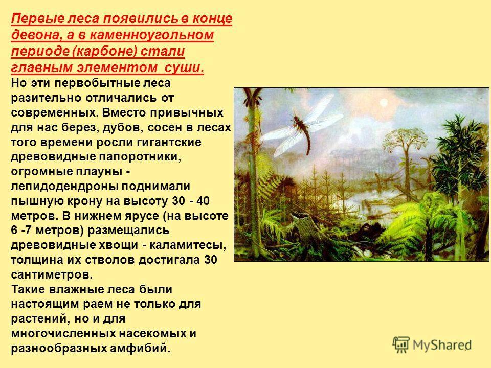 Первые леса появились в конце девона, а в каменноугольном периоде (карбоне) стали главным элементом суши. Но эти первобытные леса разительно отличались от современных. Вместо привычных для нас берез, дубов, сосен в лесах того времени росли гигантские