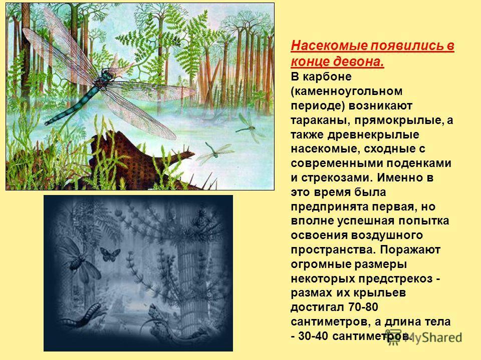 Насекомые появились в конце девона. В карбоне (каменноугольном периоде) возникают тараканы, прямокрылые, а также древнекрылые насекомые, сходные с современными поденками и стрекозами. Именно в это время была предпринята первая, но вполне успешная поп