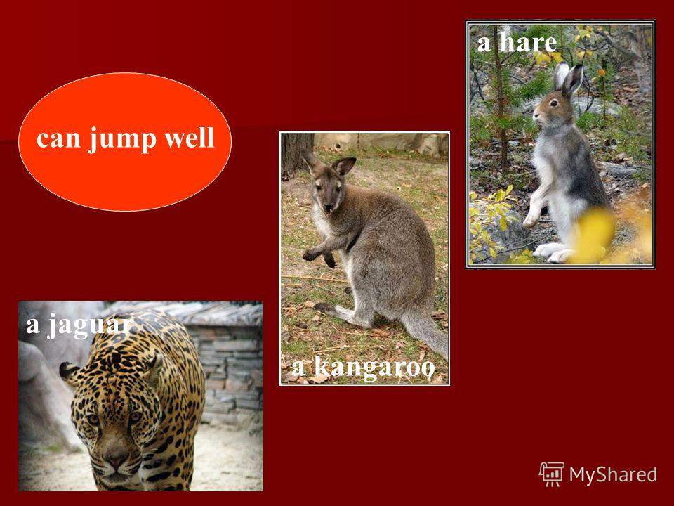 can jump well a kangaroo a hare a jaguar