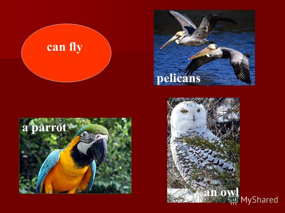 can fly pelicans a parrot an owl