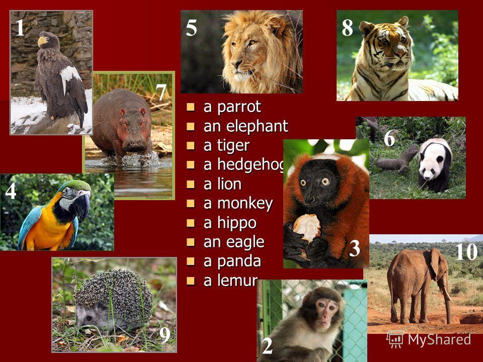 a parrot a parrot an elephant an elephant a tiger a tiger a hedgehog a hedgehog a lion a lion a monkey a monkey a hippo a hippo an eagle an eagle a panda a panda a lemur a lemur 1 2 3 4 5 6 7 8 9 10