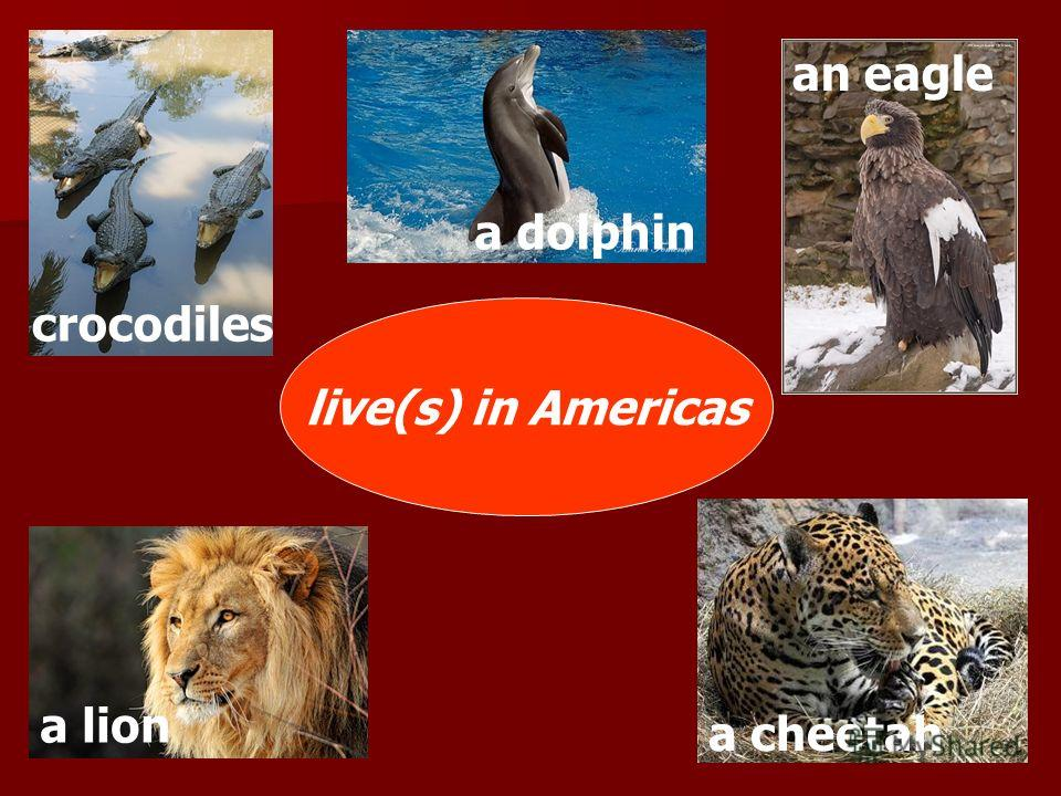 live(s) in Americas crocodiles a lion a dolphin a cheetah an eagle