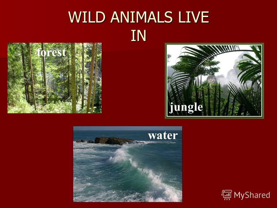 WILD ANIMALS LIVE IN forest jungle water