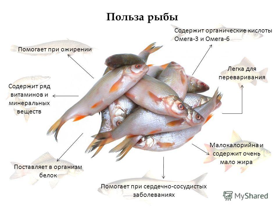 Содержит органические кислоты Омега-3 и Омега-6 Поставляет в организм белок Содержит ряд витаминов и минеральных веществ Помогает при сердечно-сосудистых заболеваниях Малокалорийна и содержит очень мало жира Помогает при ожирении Польза рыбы Легка дл