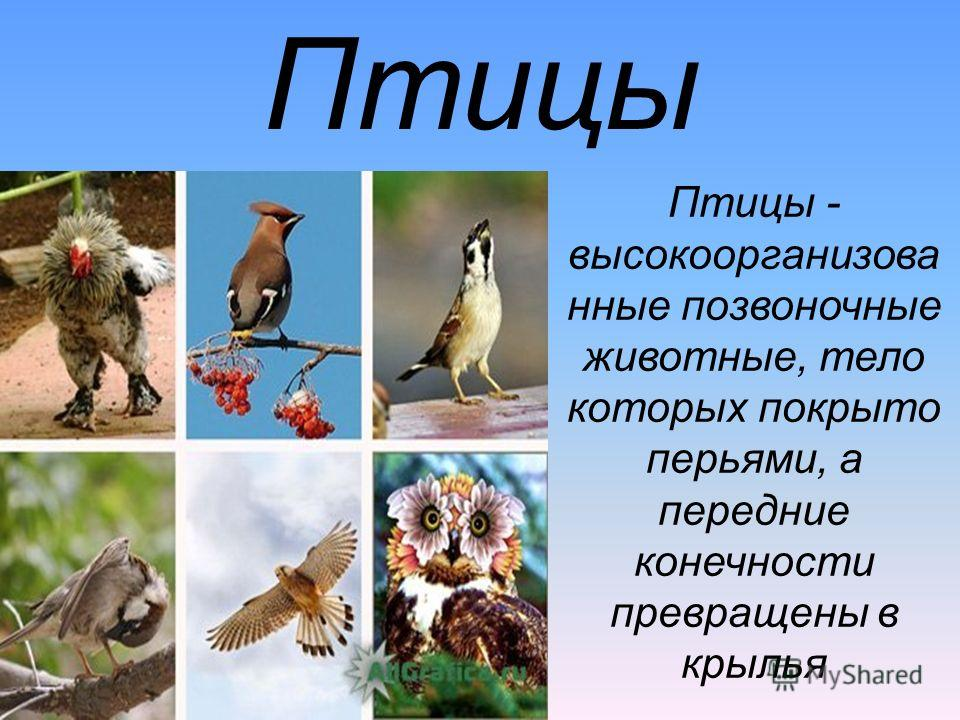 Птицы Птицы - высокоорганизова нные позвоночные животные, тело которых покрыто перьями, а передние конечности превращены в крылья