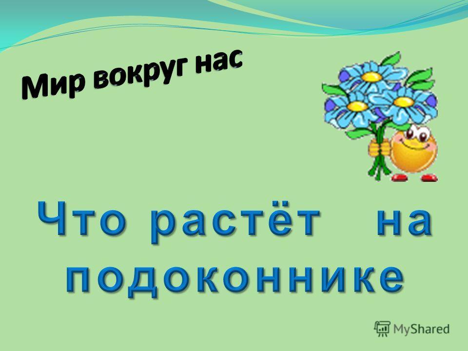 Презентация На Тему Комнатные Растения