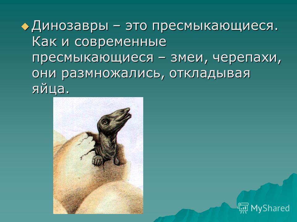 Динозавры – это пресмыкающиеся. Как и современные пресмыкающиеся – змеи, черепахи, они размножались, откладывая яйца. Динозавры – это пресмыкающиеся. Как и современные пресмыкающиеся – змеи, черепахи, они размножались, откладывая яйца.