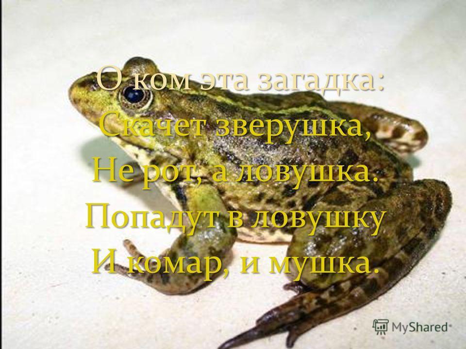 О ком эта загадка: О ком эта загадка: Скачет зверушка, Не рот, а ловушка. Попадут в ловушку И комар, и мушка.