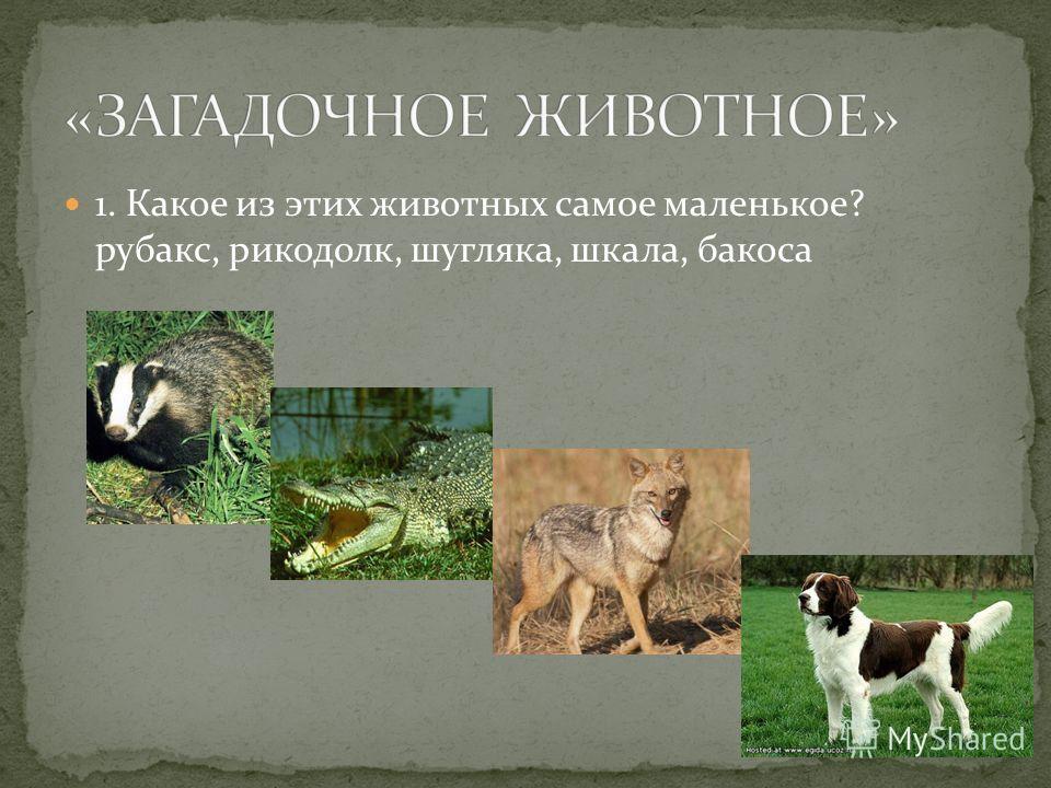 1. Какое из этих животных самое маленькое? рубакс, рикодолк, шугляка, шкала, бакоса