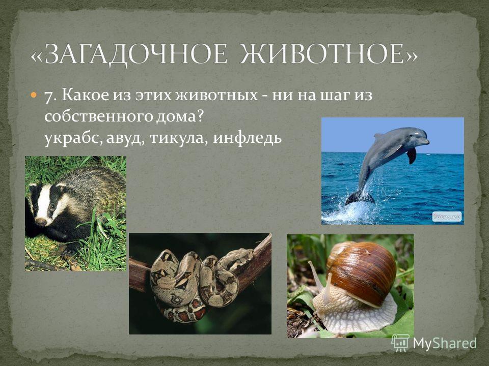 7. Какое из этих животных - ни на шаг из собственного дома? украбс, авуд, тикула, инфледь