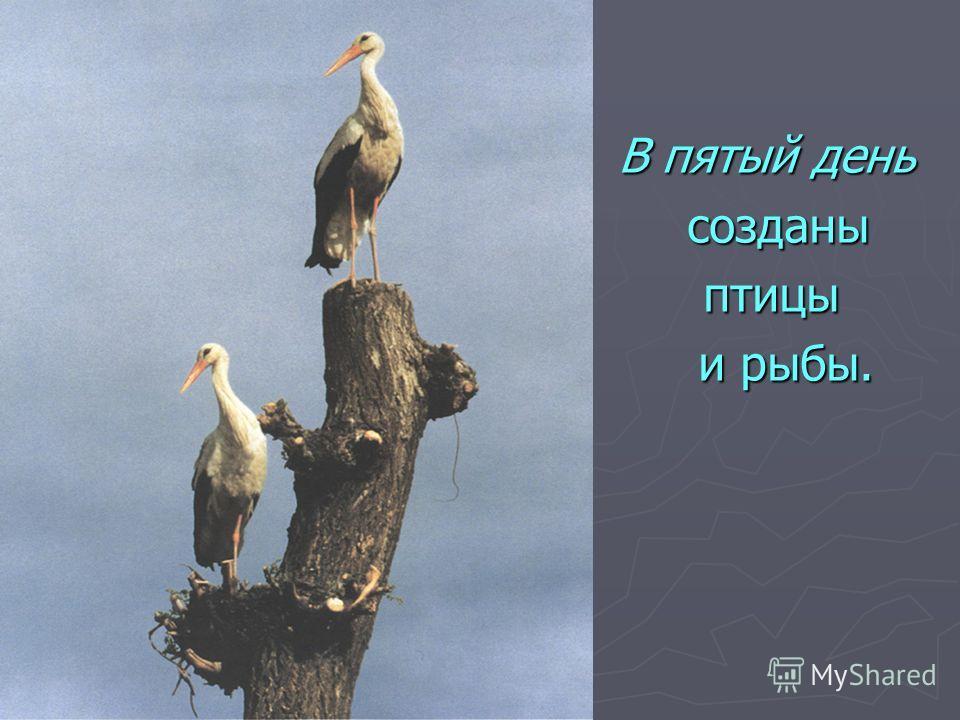 В пятый день созданы птицы и рыбы.