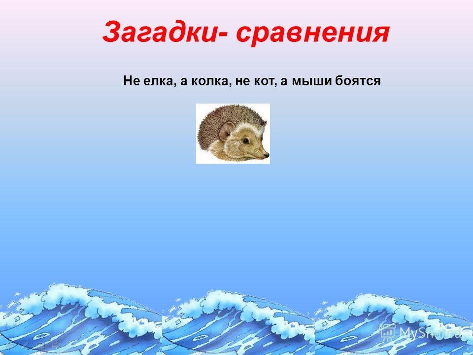 Загадки- сравнения Не елка, а колка, не кот, а мыши боятся