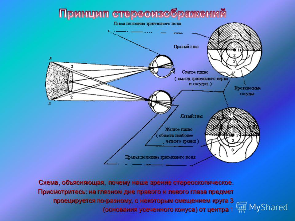 Схема, объясняющая, почему наше зрение стереоскопическое. Присмотритесь: на глазном дне правого и левого глаза предмет проецируется по-разному, с некоторым смещением круга 3 (основания усеченного конуса) от центра Схема, объясняющая, почему наше зрен