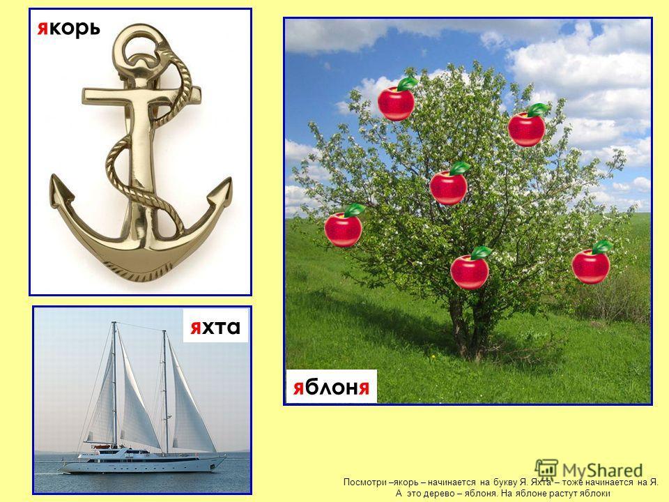 Посмотри –якорь – начинается на букву Я. Яхта – тоже начинается на Я. А это дерево – яблоня. На яблоне растут яблоки яблоня якорь яхта