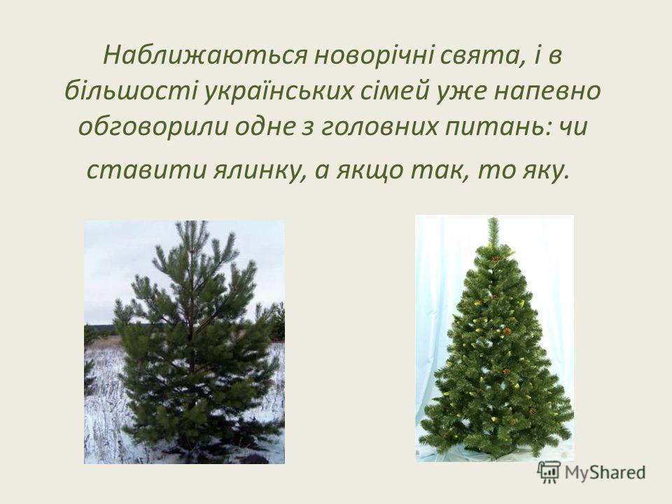 Наближаються новорічні свята, і в більшості українських сімей уже напевно обговорили одне з головних питань: чи ставити ялинку, а якщо так, то яку.