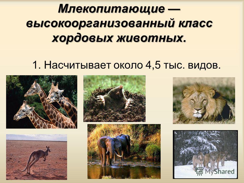 Класс Млекопитающие или Звери. Внешнее строение. Среды жизни и места обитания Млекопитающих.