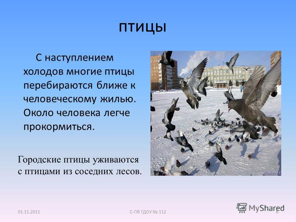 Птицы городские птицы уживаются с