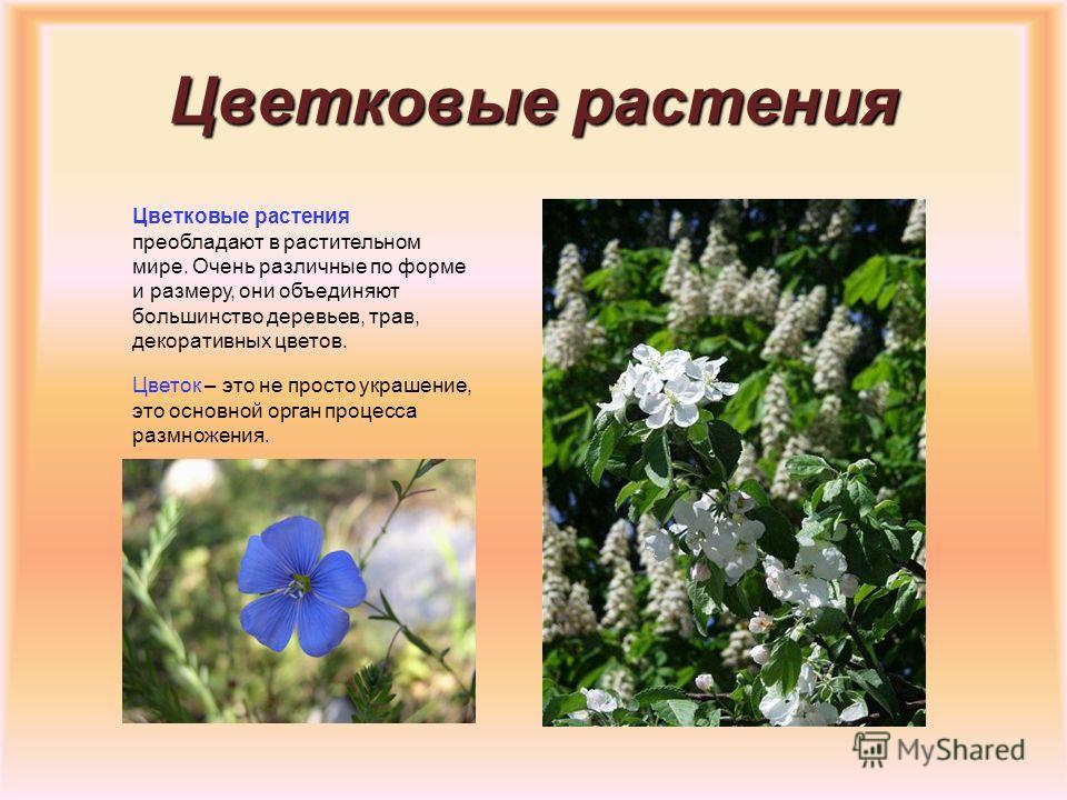 Хвойные растения Листья хвойных растений имеют чаще всего форму иголок, и большинство растений сохраняют их зимой. Это деревья с неопадающий листвой. Под корой у них имеются каналы, выделяющие смолу. Хвойные растения имеют шишки, которые бывают женск