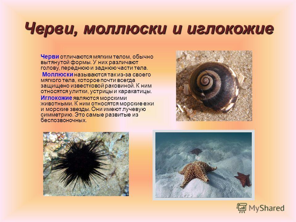 Губки медузы и кораллы Это древнейшие беспозвоночные животные, появившиеся на Земле. Губки – самые простые из беспозвоночных. Они состоят из скопления клеток, мало чем отличающихся друг от друга. Живут в морской воде и полностью неподвижны. Медузы и