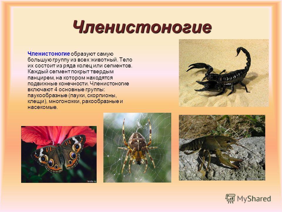 Черви, моллюски и иглокожие Черви отличаются мягким телом, обычно вытянутой формы. У них различают голову, переднюю и заднюю части тела. Моллюски называются так из-за своего мягкого тела, которое почти всегда защищено известковой раковиной. К ним отн