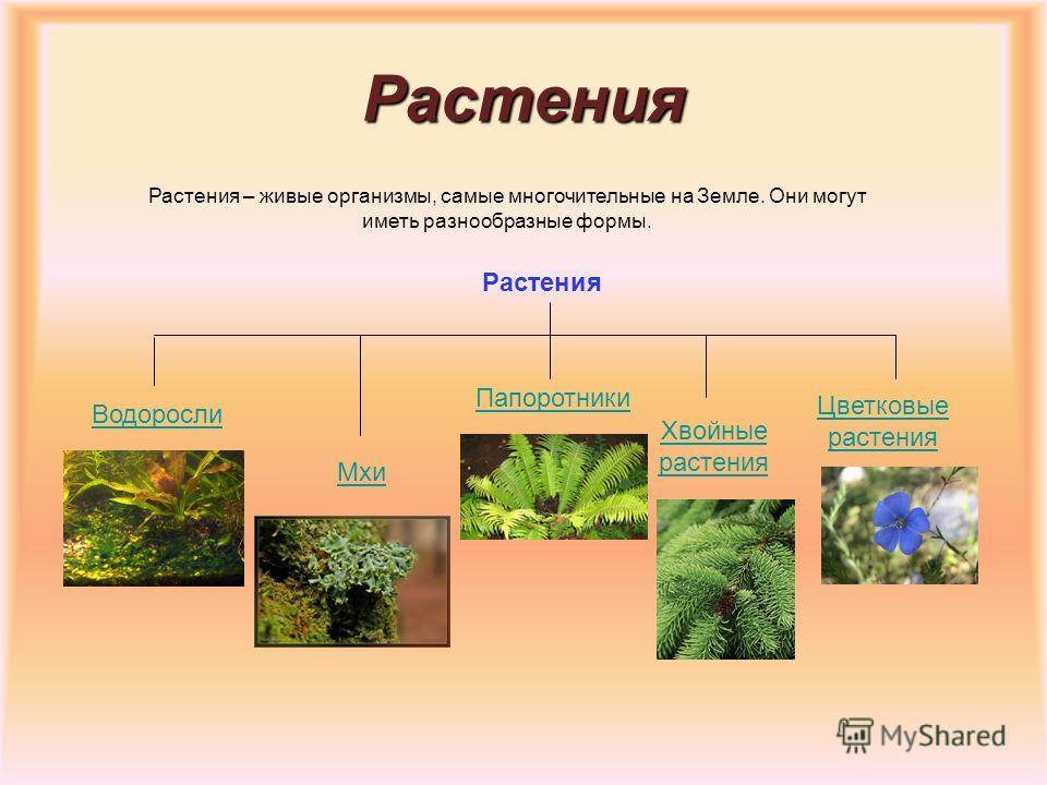 Грибы НизшиеВысшие Грибы представляют особое царство, отличное от растений, так как они не содержат хлорофилла.