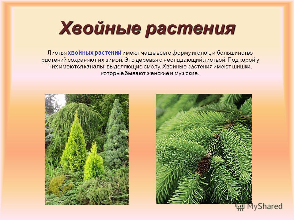 Водоросли Самые древние из всех растений. В большинстве своём они живут в воде. У них очень простое строение, в котором отсутствуют корень, стебель и листья и имеется один различимый элемент – слоевище. Размеры их самые разнообразные – от микроскопич