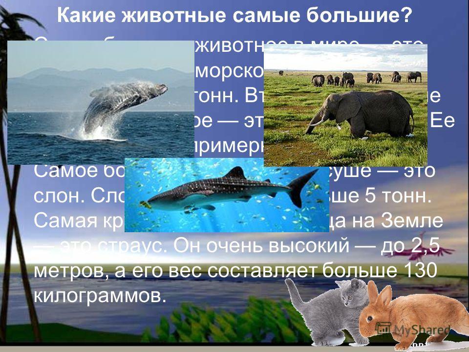 Какие животные самые большие? Самое большое животное в мире это кит. Кит живет в морской воде. Его вес составляет 150 тонн. Второе по величине морское животное это китовая акула. Ее вес составляет примерно 12-14 тонн. Самое большое животное на суше э