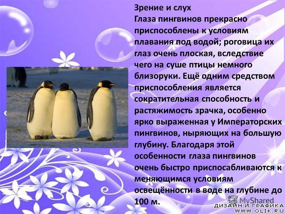 Зрение и слух Глаза пингвинов прекрасно приспособлены к условиям плавания под водой; роговица их глаз очень плоская, вследствие чего на суше птицы немного близоруки. Ещё одним средством приспособления является сократительная способность и растяжимост