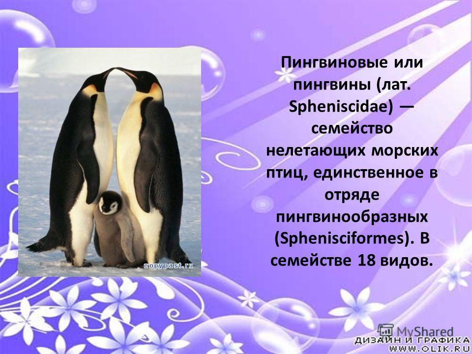 Пингви́новые или пингвины (лат. Spheniscidae) семейство нелетающих морских птиц, единственное в отряде пингвинообра́зных. В семействе 18 видов. Все представители этого семейства хорошо плавают и ныряют. Пингвиновые или пингвины (лат. Spheniscidae) се