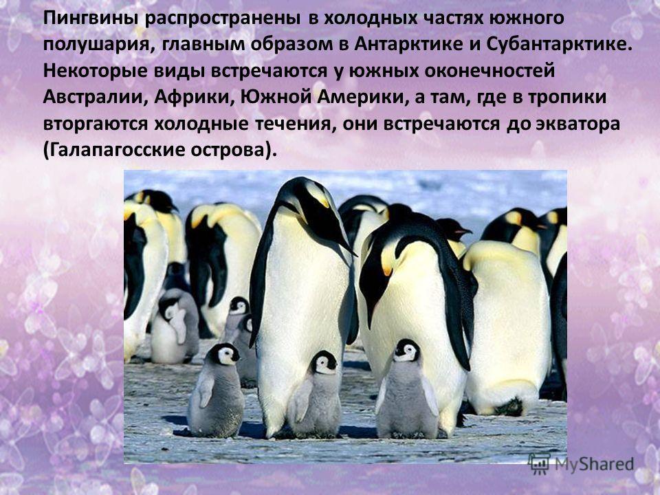 Пингвины распространены в холодных частях южного полушария, главным образом в Антарктике и Субантарктике. Некоторые виды встречаются у южных оконечностей Австралии, Африки, Южной Америки, а там, где в тропики вторгаются холодные течения, они встречаю